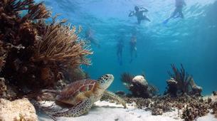 Esnórquel-Islas Eolias-Snorkeling Tours in Aeolian Islands, Sicily-1