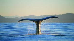Helicopter tours-Christchurch-Whale Watching Helicopter Tour in Kaikoura-1
