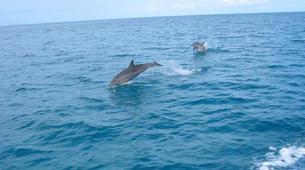Esnórquel-Islas Eolias-Snorkeling Tours in Aeolian Islands, Sicily-3