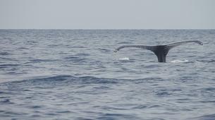 Snorkeling-Les Trois-Îlets-Snorkeling et Observation des Dauphins aux Trois-Îlets, Martinique-13