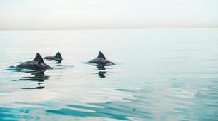 Kayaking-Cape Town-Kayaking Tour along Atlantic Seaboard Coastline-4