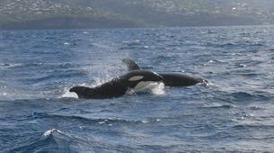 Snorkeling-Les Trois-Îlets-Snorkeling et Observation des Dauphins aux Trois-Îlets, Martinique-10