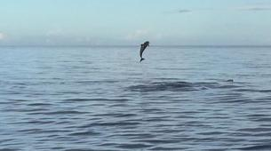 Snorkeling-Les Trois-Îlets-Snorkeling et Observation des Dauphins aux Trois-Îlets, Martinique-4
