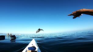 Kayaking-Cape Town-Kayaking Tour along Atlantic Seaboard Coastline-1