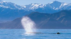 Helicopter tours-Christchurch-Whale Watching Helicopter Tour in Kaikoura-3