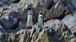 Tierwelt Abenteuer-Port Elizabeth-Penguin Patrol Cruise in Algoa Bay-1