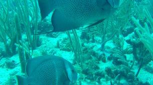 Snorkeling-Les Trois-Îlets-Excursion Snorkeling aux Trois-Îlets, Martinique-3