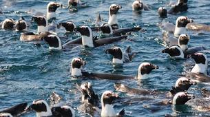 Tierwelt Abenteuer-Port Elizabeth-Penguin Patrol Cruise in Algoa Bay-3