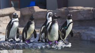 Tierwelt Abenteuer-Port Elizabeth-Penguin Patrol Cruise in Algoa Bay-4