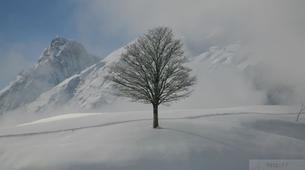 Raquette à Neige-Val d'Arly-Randonnée Raquettes à Praz-sur-Arly, Haute-Savoie-8