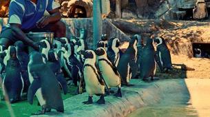 Tierwelt Abenteuer-Port Elizabeth-Penguin Patrol Cruise in Algoa Bay-6