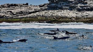 Tierwelt Abenteuer-Port Elizabeth-Penguin Patrol Cruise in Algoa Bay-2