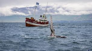 Wildlife Experiences-Dalvík-Whale Watching from Dalvík, North of Iceland-3