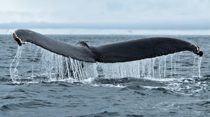 Wildlife Experiences-Svalbard-Nature and Wildlife Boat Tour in Svalbard, Norway-3