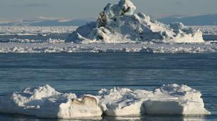 Wildlife Experiences-Svalbard-Nature and Wildlife Boat Tour in Svalbard, Norway-9