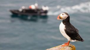 Wildlife Experiences-Svalbard-Nature and Wildlife Boat Tour in Svalbard, Norway-5