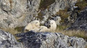 Wildlife Experiences-Svalbard-Nature and Wildlife Boat Tour in Svalbard, Norway-4
