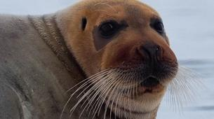 Wildlife Experiences-Svalbard-Nature and Wildlife Boat Tour in Svalbard, Norway-2