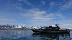 Wildlife Experiences-Svalbard-Speed Boat Trip to a Walrus Colony on Svalbard-6