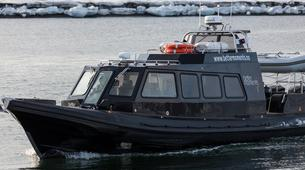 Wildlife Experiences-Svalbard-Boat Tour to Ny-Ålesund, the Northernmost City in the World-6