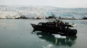 Wildlife Experiences-Svalbard-Nature and Wildlife Boat Tour in Svalbard, Norway-6