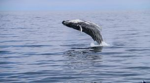 Wildlife Experiences-Dalvík-Whale Watching from Dalvík, North of Iceland-6