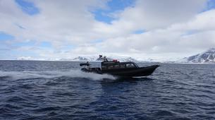Wildlife Experiences-Svalbard-Nature and Wildlife Boat Tour in Svalbard, Norway-7