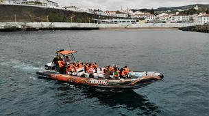 Wildlife Experiences-Terceira-Whale watching from Angra do Heroísmo in Terceira Island-5