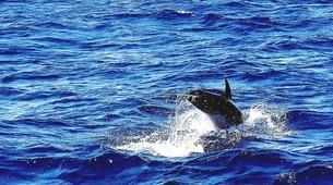 Sailing-Mykonos-All Inclusive Sailing Yacht Cruise to South Mykonos Beach, Rhenia & Delos Islands-6