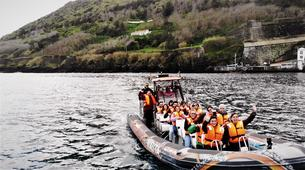 Wildlife Experiences-Terceira-Whale watching from Angra do Heroísmo in Terceira Island-6