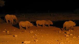 Safari-Windhoek-3 Day Safari in Etosha National Park-4