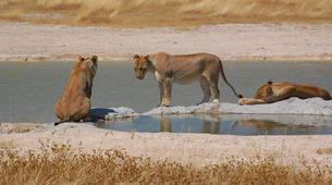 Safari-Windhoek-3 Day Safari in Etosha National Park-1
