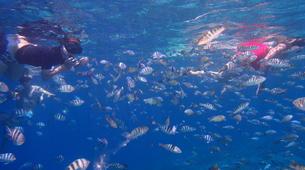 Snorkeling-Nusa Penida-Snorkelling Excursion in Nusa Penida from Nusa Lembongan-5