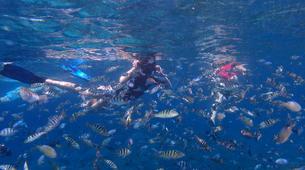Snorkeling-Nusa Penida-Snorkelling Excursion in Nusa Penida from Nusa Lembongan-6