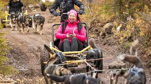 Dog sledding-Rovaniemi-Husky cart excursion from Rovaniemi-2