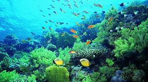 Snorkeling-Nusa Penida-Snorkelling Excursion in Nusa Penida from Nusa Lembongan-4