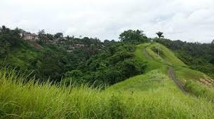 Hiking / Trekking-Ubud-Ubud Rice Paddies Trekking with Campuhan Ridge Walk-3