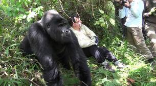 Randonnée / Trekking-Volcanoes National Park-Gorilla Trekking in Volcanoes National Park-1