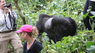 Randonnée / Trekking-Volcanoes National Park-Gorilla Trekking in Volcanoes National Park-6