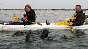 Seekajak-Walvis Bay-Sea Kayaking excursion in Walvis Bay, Namibia-3