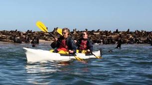 Seekajak-Walvis Bay-Sea Kayaking excursion in Walvis Bay, Namibia-5