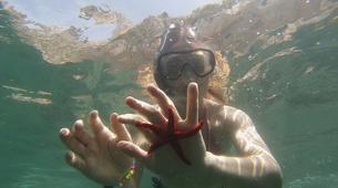 Snorkeling-Marseille-Randonnée Palmée autour de l'île d'Endoume, Marseille-2