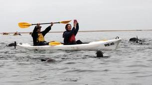 Seekajak-Walvis Bay-Sea Kayaking excursion in Walvis Bay, Namibia-4