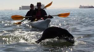 Seekajak-Walvis Bay-Sea Kayaking excursion in Walvis Bay, Namibia-6