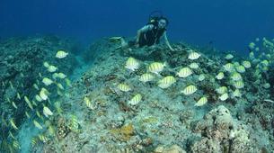 Plongée sous-marine-Baie de Saint-Leu-Plongées Exploration Guidées dans la Baie de Saint Leu, La Réunion-5
