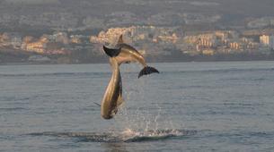 Wildlife Experiences-Fuengirola-Dolphin Watching boat tour from Fuengirola-1