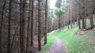 Mountain bike-Edinburgh-Adventure Mountain Biking at Glentress Forest, Tweed Valley near Edinburgh-2