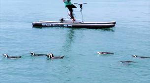 Kayaking-Simon's Town-Water Biking Tour from Simon's Town-1