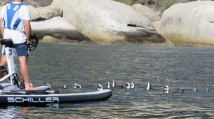Kayaking-Simon's Town-Water Biking Tour from Simon's Town-4