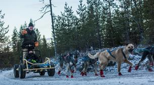 Dog sledding-Rovaniemi-Husky cart excursion from Rovaniemi-1